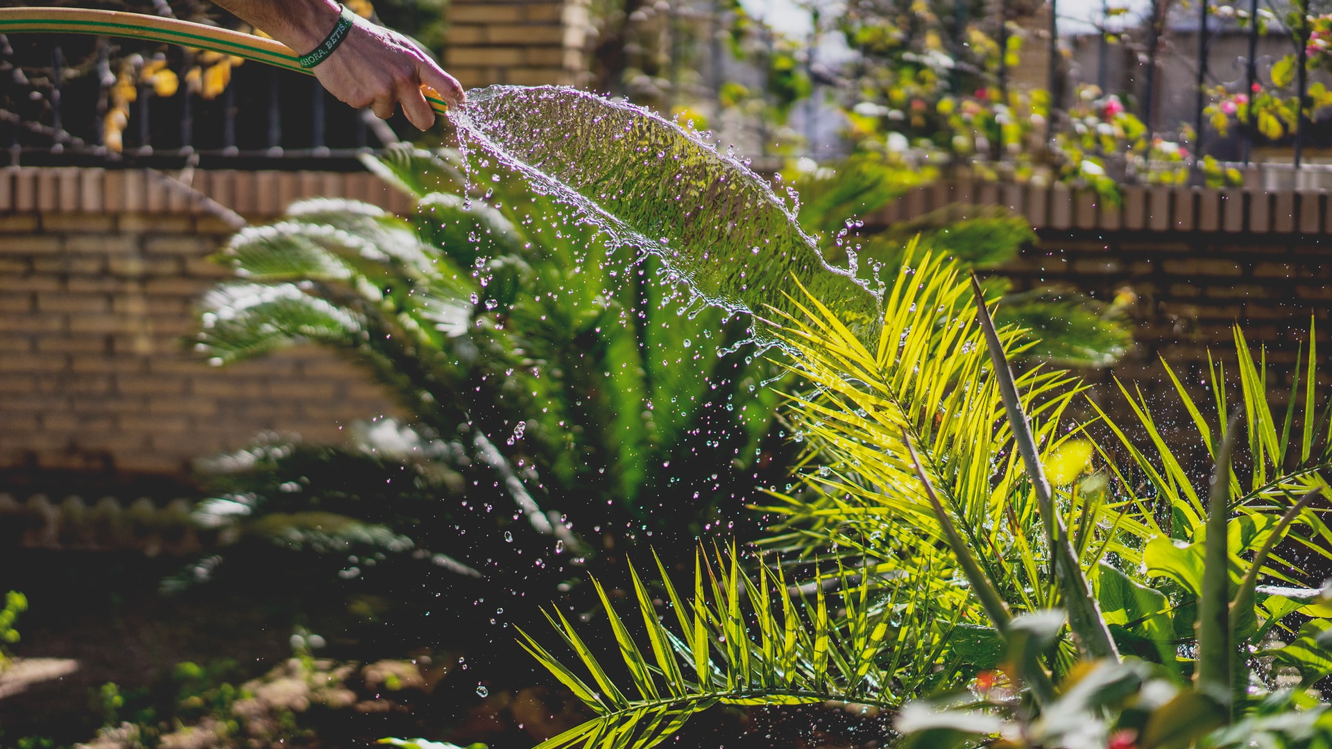 4 Simple Tips to Make Home Gardening Easier and More Efficient